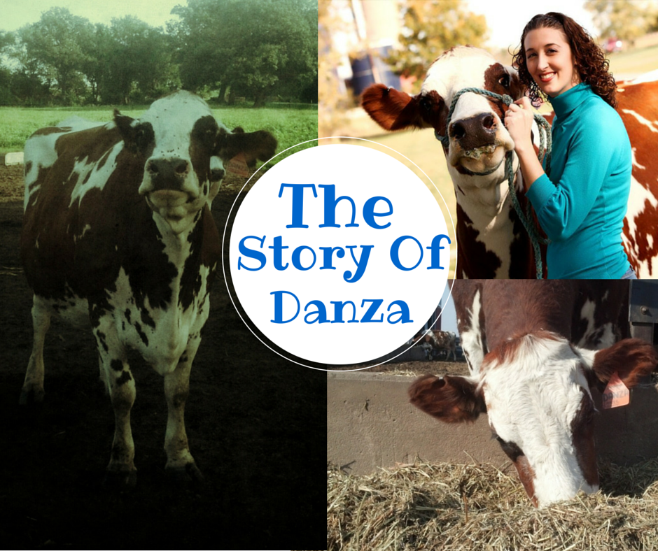 the story of danza