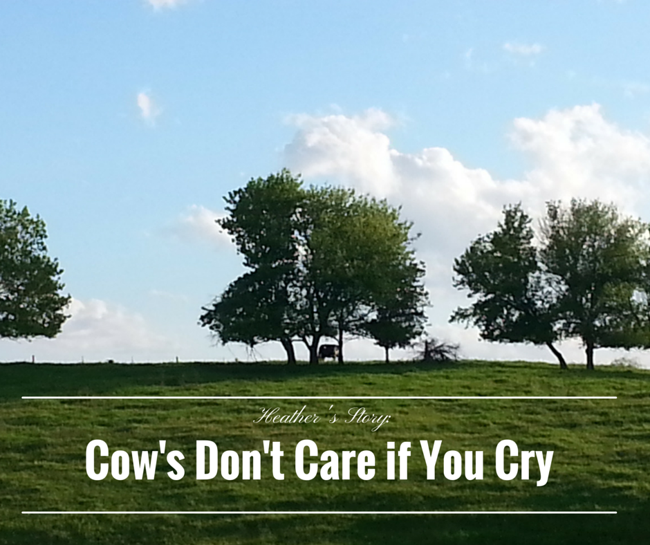 Cow's Don't Care if You Cry