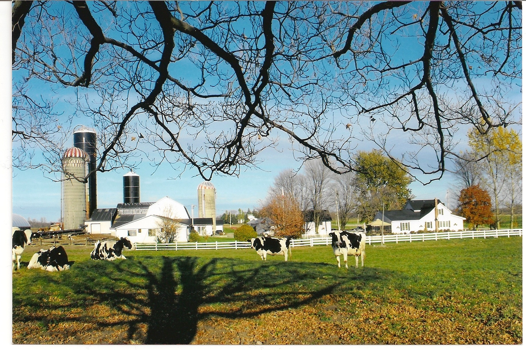 how to buy a dairy farm in ontario